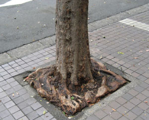square root of Japan