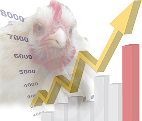Increase in chicken numbers may be bogus.