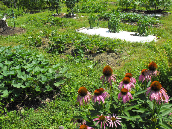 Permanent raised beds with mown aisles