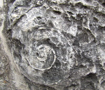 Fossil in the rocks at Coba