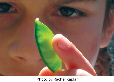 Child holding up a pea
