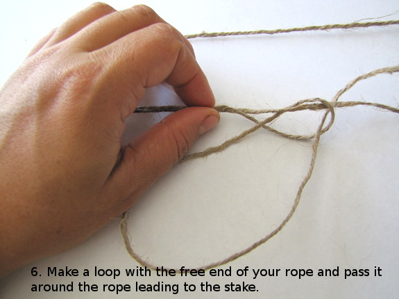 Make a loop with the free end of your rope and pass it around the rope leading to the stake.