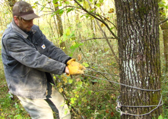 tying a winch wire to a tree