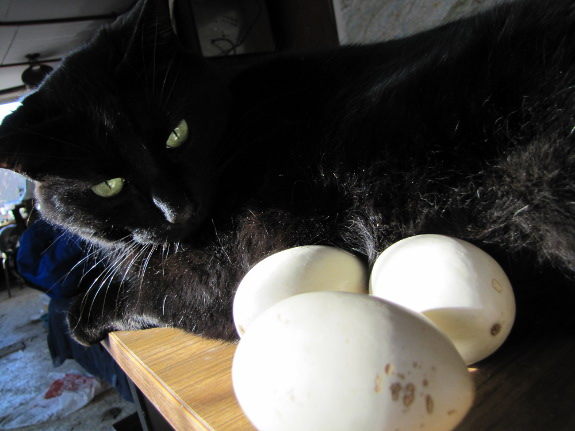 Cat and egg gourds