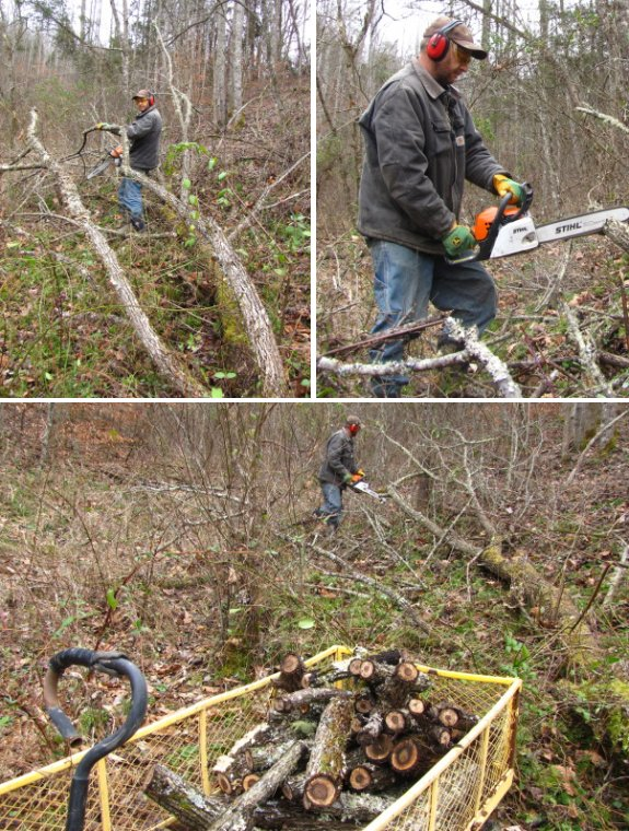 cutting up a fallen walnut tree for fire wood