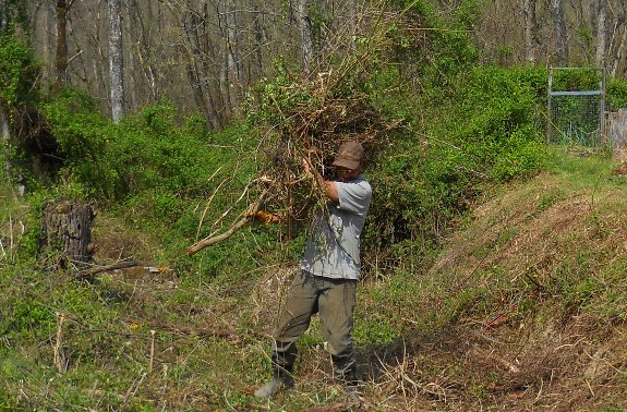 clearing out brambles the hard way by hand