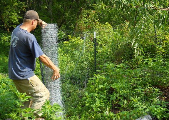 5 foot high deer fence made from chicken wire
