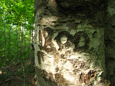 Date carved in tree