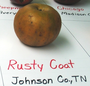 Rusty Coat apple