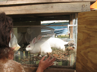 how to make nest boxe for rabbits