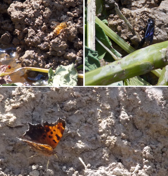 Insects drawn to mud
