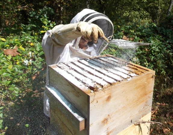 Powdering a bee hive