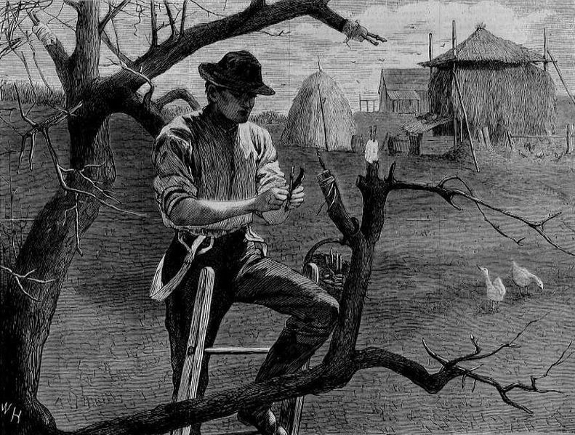 Winslow Homer grafting