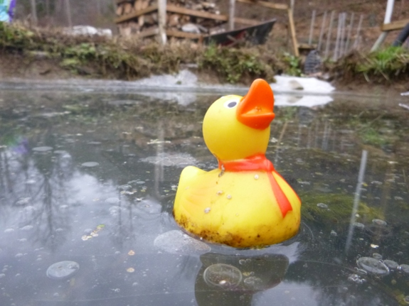 rubber ducky floating in pond during winter with wood pile in background