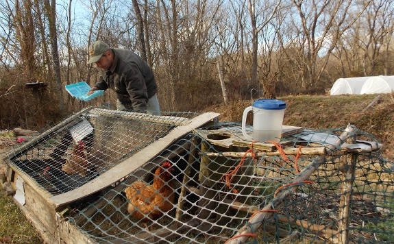 update on the winter chicken tractor