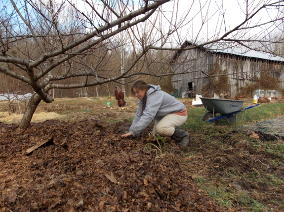 Kayla spreading leaves as mulch in the middle of Winter