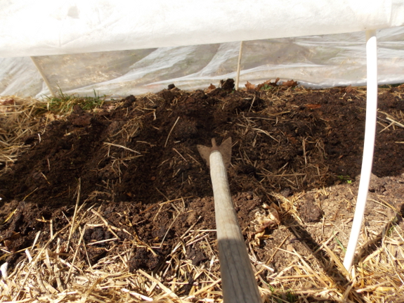 Planting under quick hoops