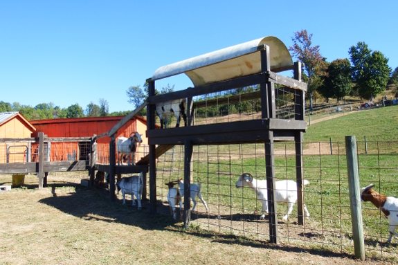 Play gym for goats!
