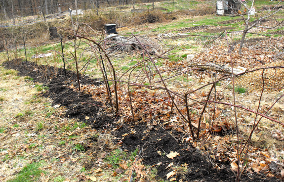 Pruning And Maintaining Brambles